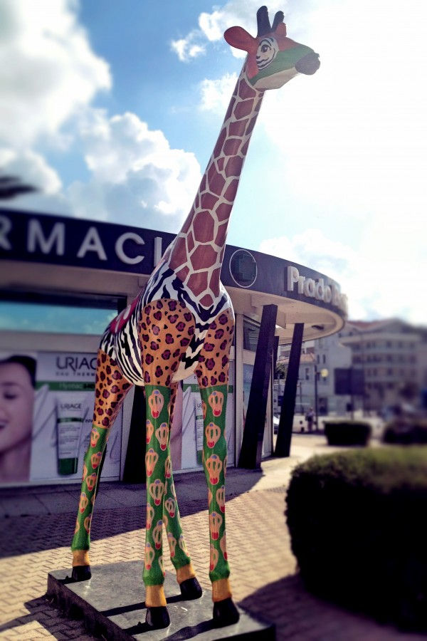 La Girafe du jour !