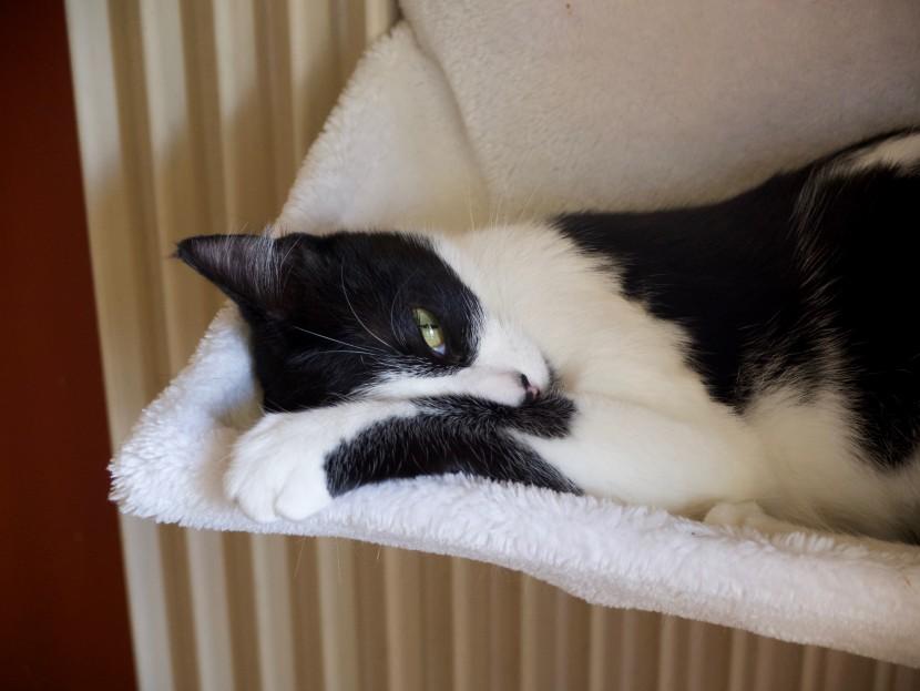 Marley, le chaton (bientôt 1 an)