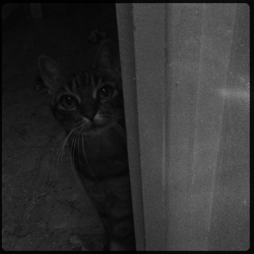 Perle, 14 ans, chatte toujours câline.