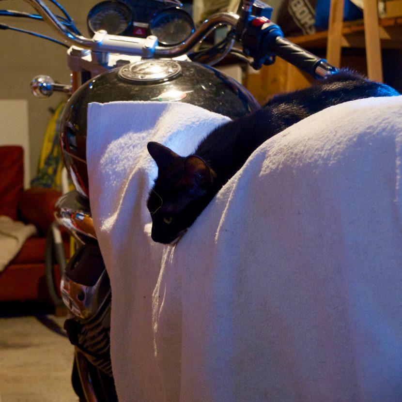 Un chat sur ma Moto Guzzi