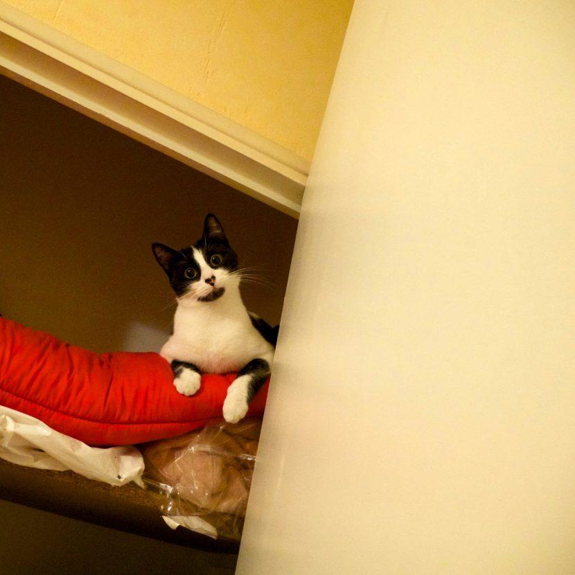 Marley, chat perché dans le placard !