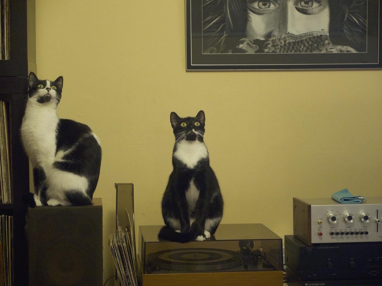 Des chats et une mouche !