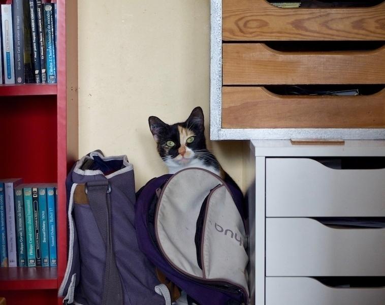 Un chaton, Shiva, qui est surprise derrière mon sac