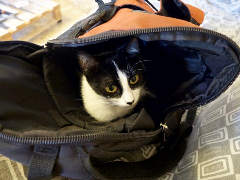 Marley, le chat dans le sac à dos