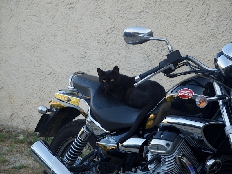 Copy Cat le chat squatte la moto