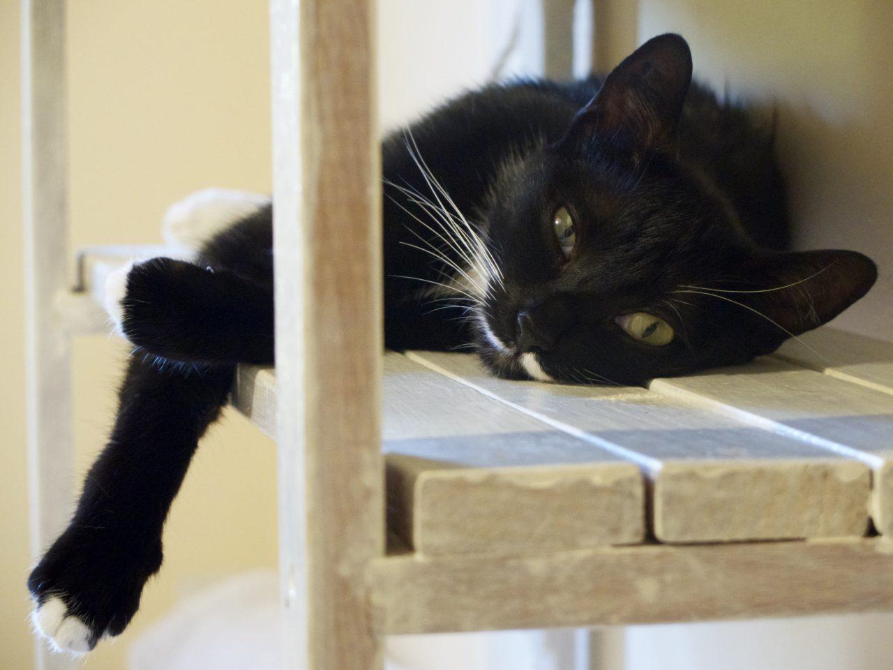 Omalée, chat malin !