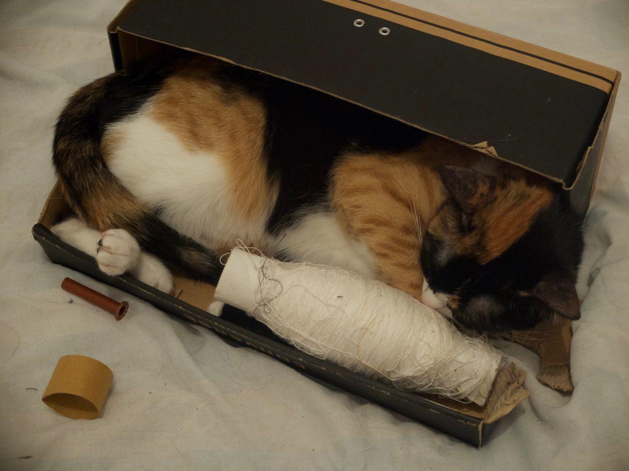 Duchesse, jeune chatte dans une boite à chaussure transformée en boite à couture !