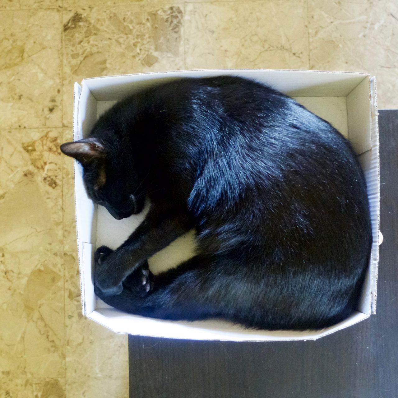 Le chat dort dans un carton !