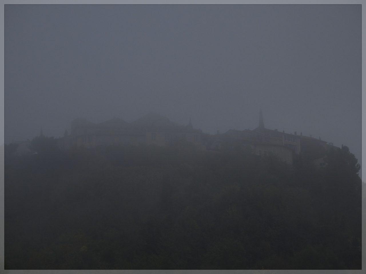 Grambois et brouillard matinal