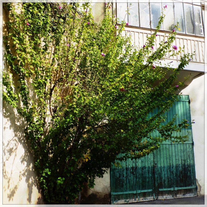 Un arbre dans un coin d'une petite place !