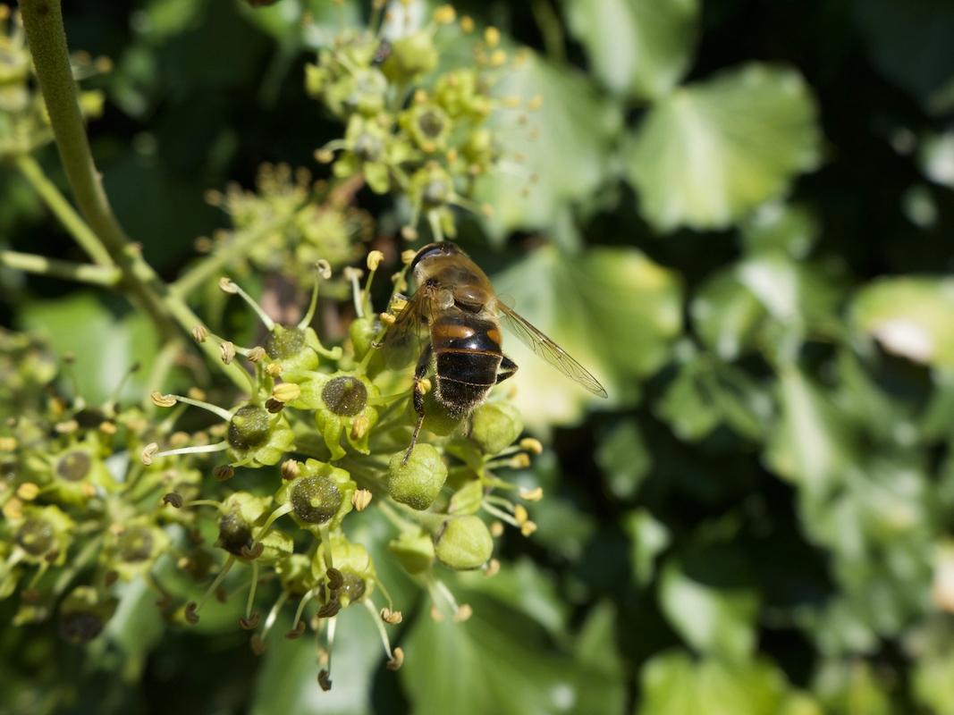 [Un jour, une Photo] Le retour de l'abeille