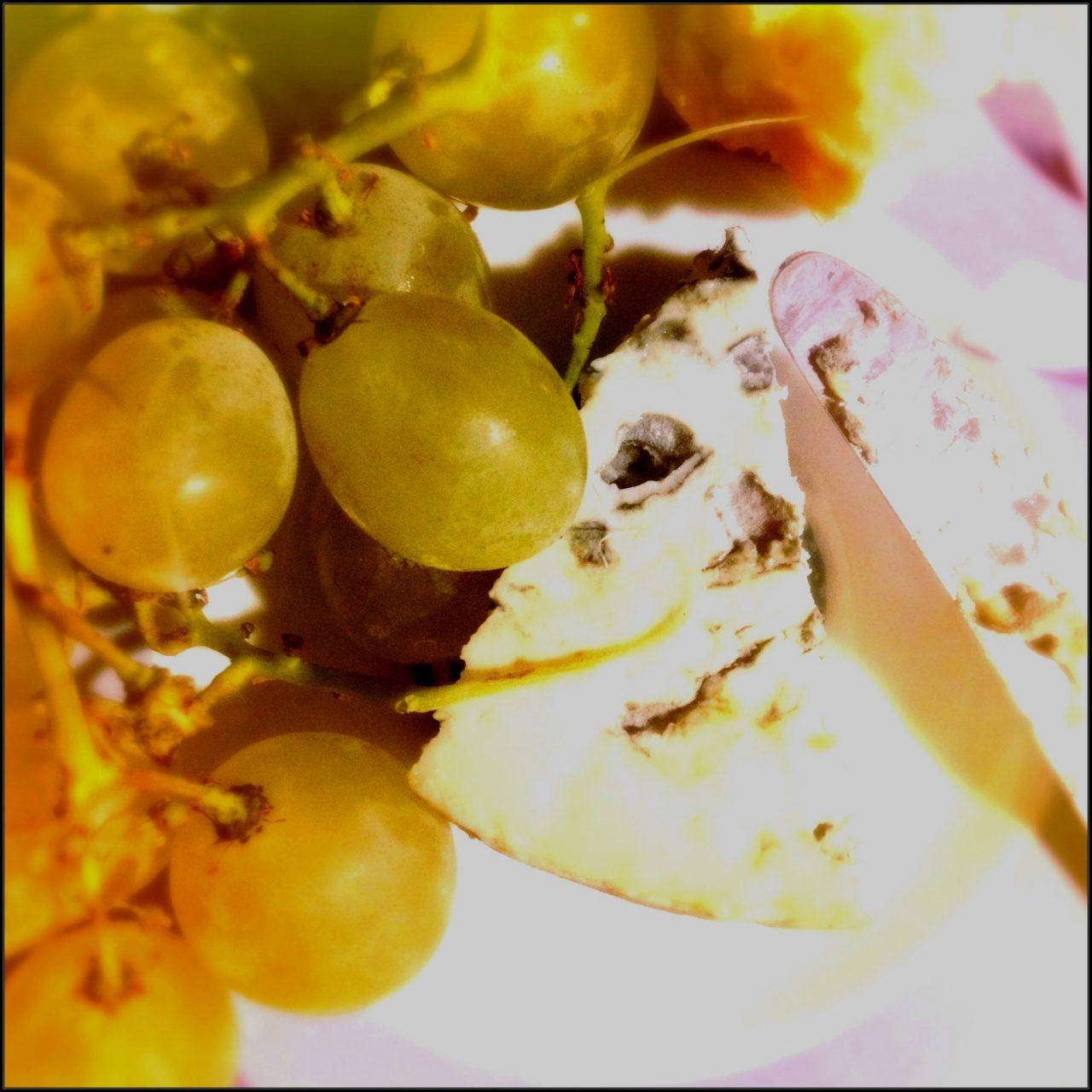 bleu et raisin
