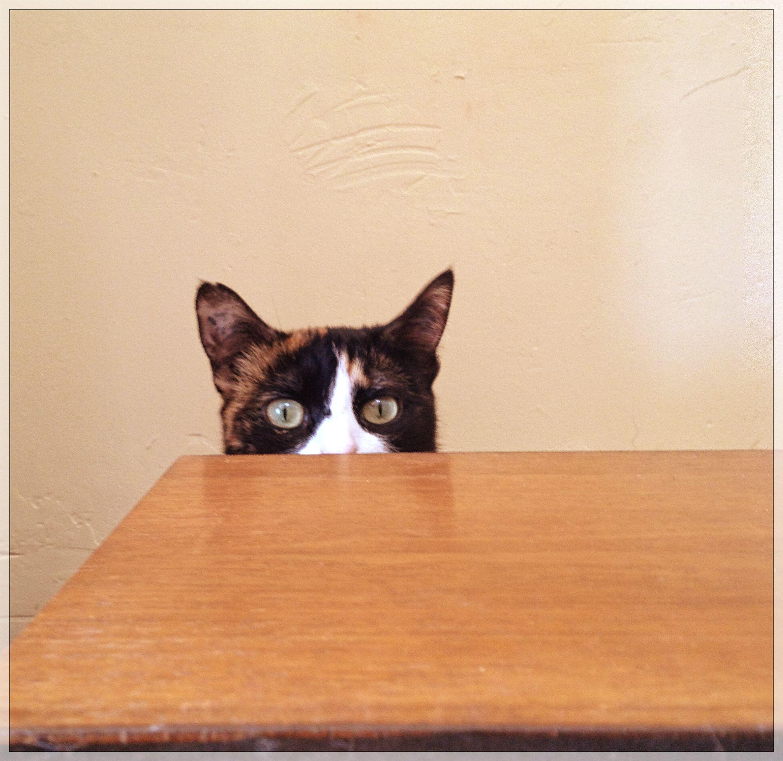 [Le chat du jour] Duchesse curiosité !