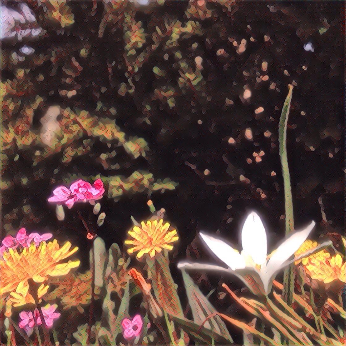 C'est le printemps, fleurs du jardin