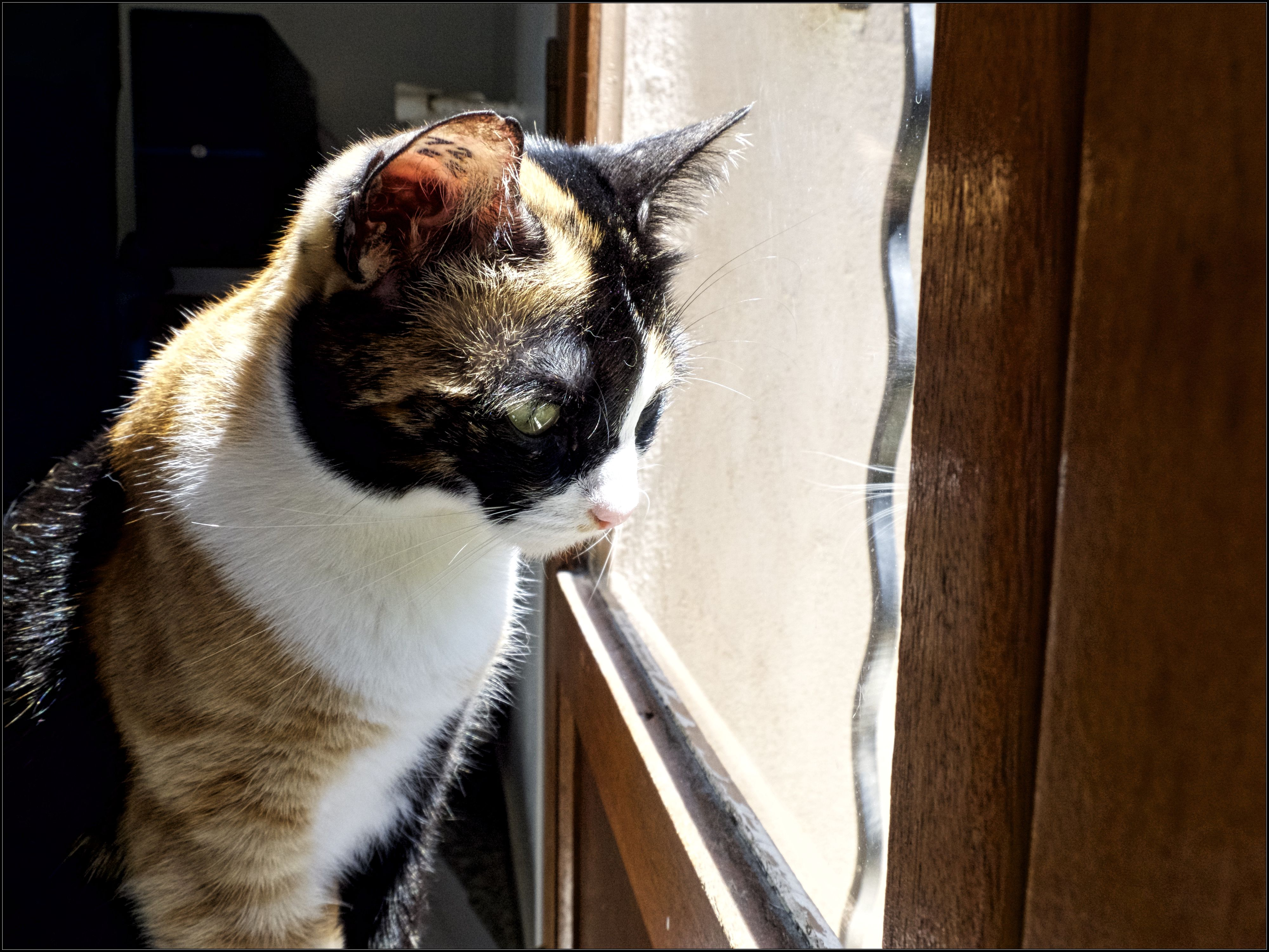 [Nos Chats] Duchesse