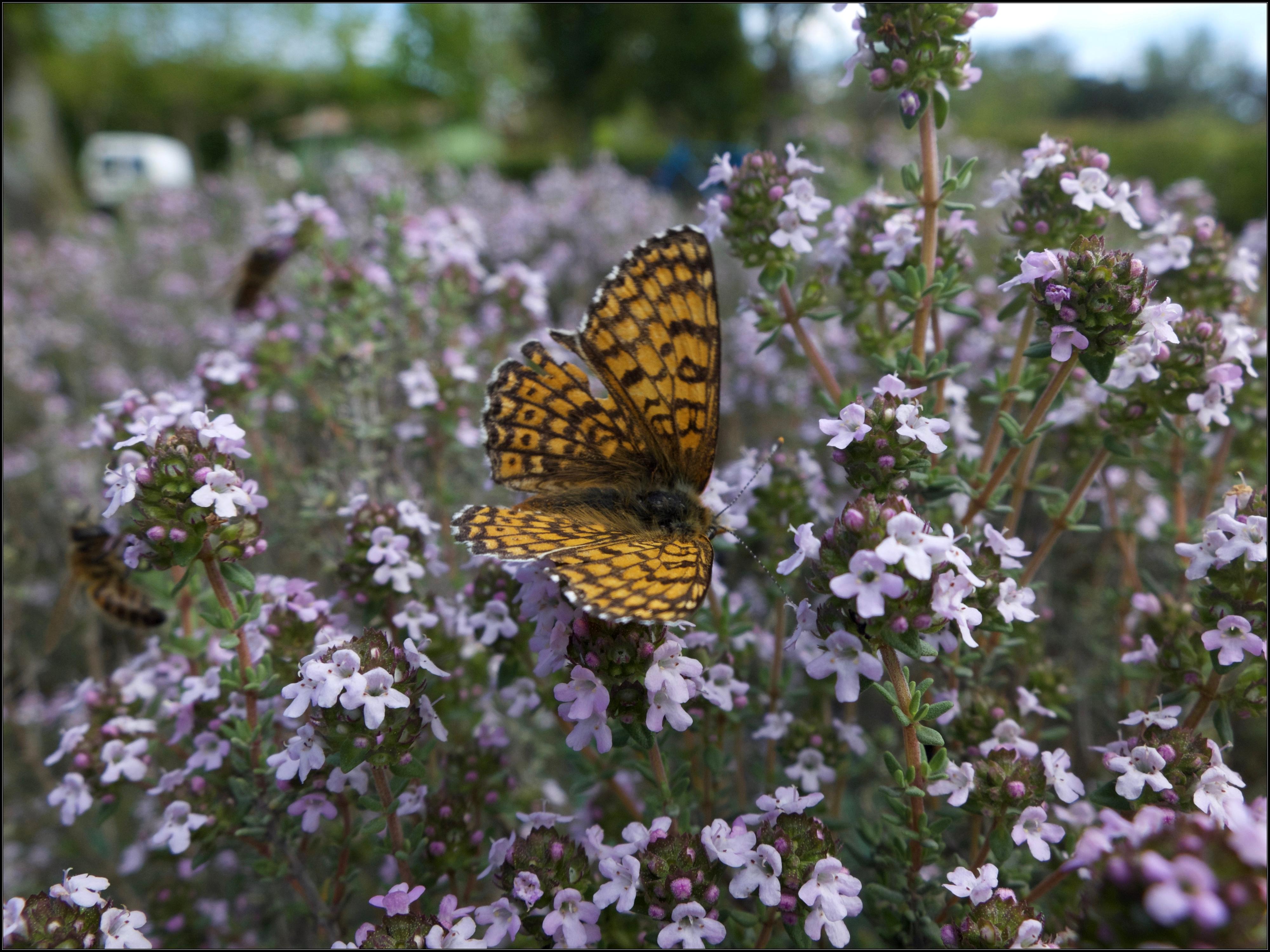 [Image du Jour] Papillon