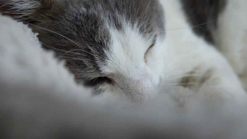 Notre Chat, Cailloux a déployé ses ailes cette nuit !