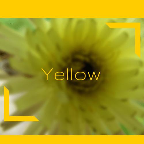 Petite jaune