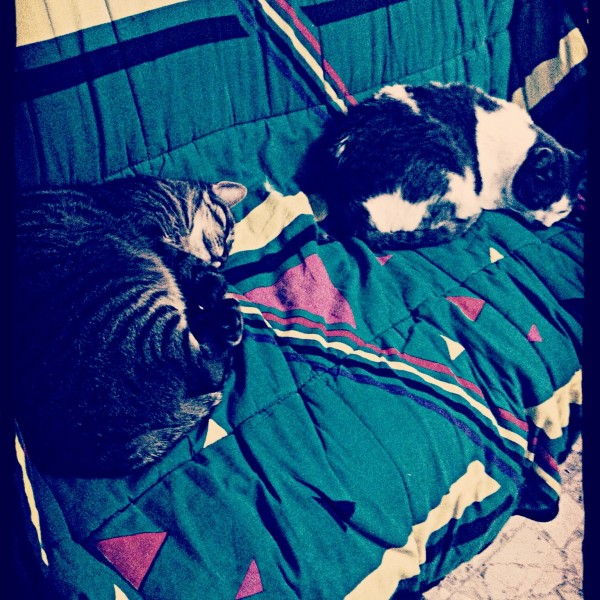 Chats dormants