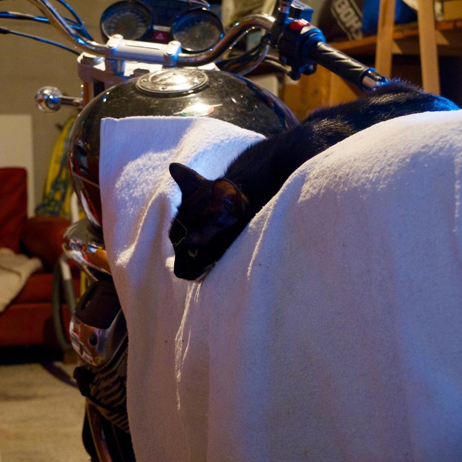 Motor Bike Cat