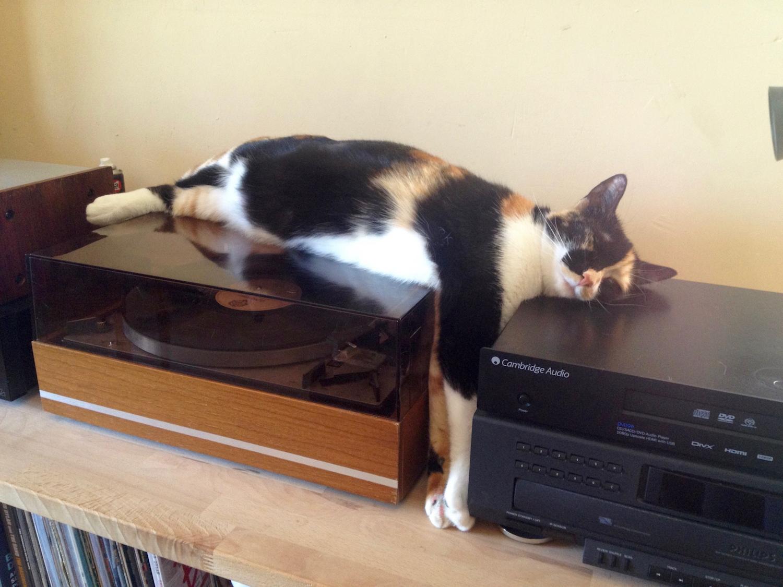 [le chat du jour] Blocus par Shiva !
