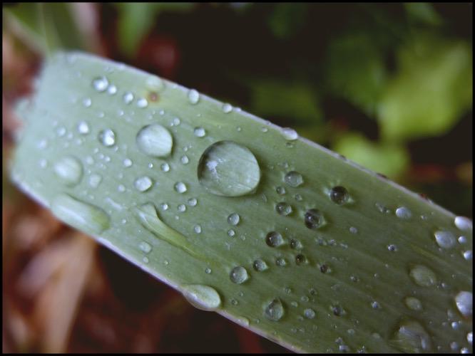 [Un jour, une Photo] After Rain