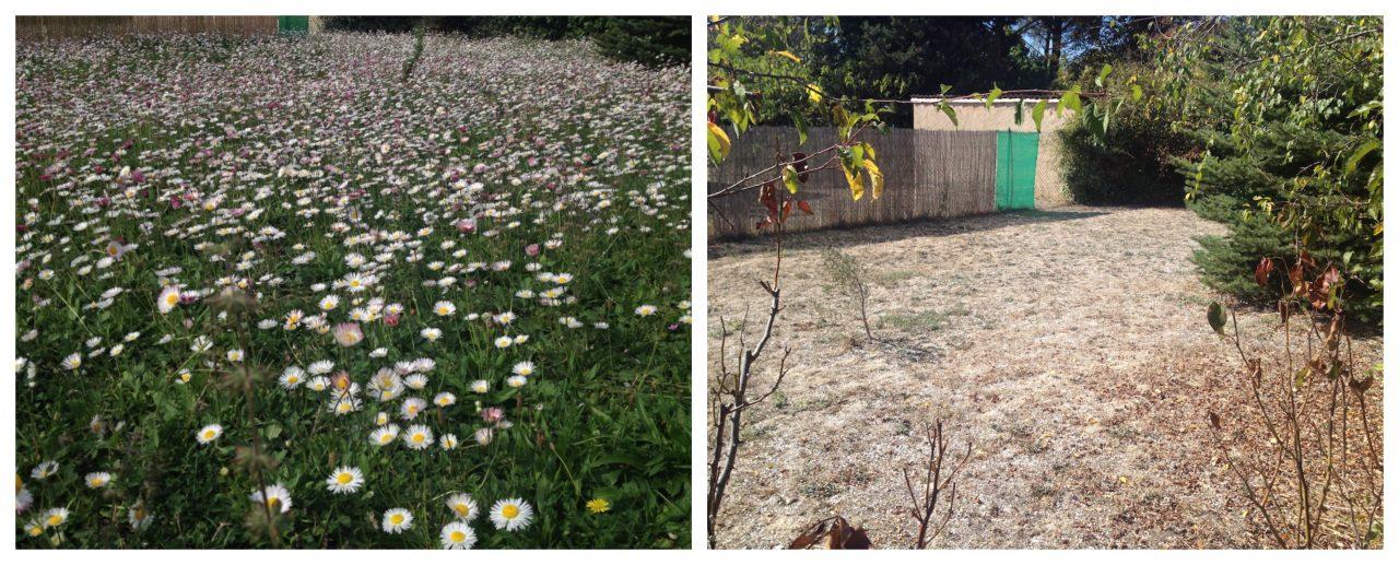 Notre jardin 5 octobre 2016, et 5 octobre 2017 !