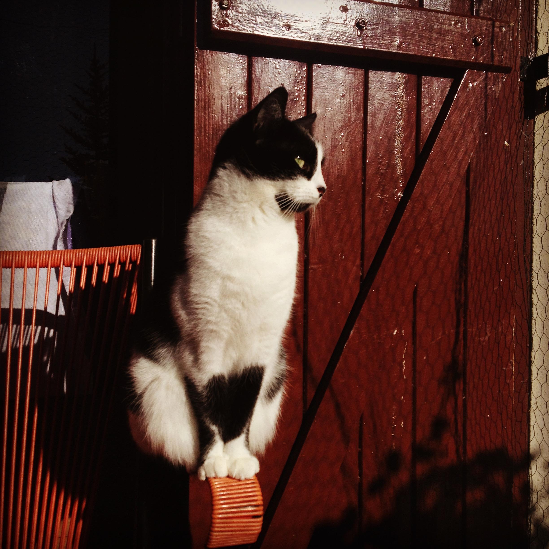 [Le chat du jour] Sur l'accoudoir !