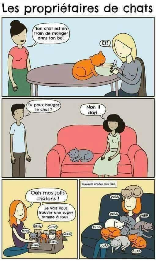 Les propriétaires de chats !