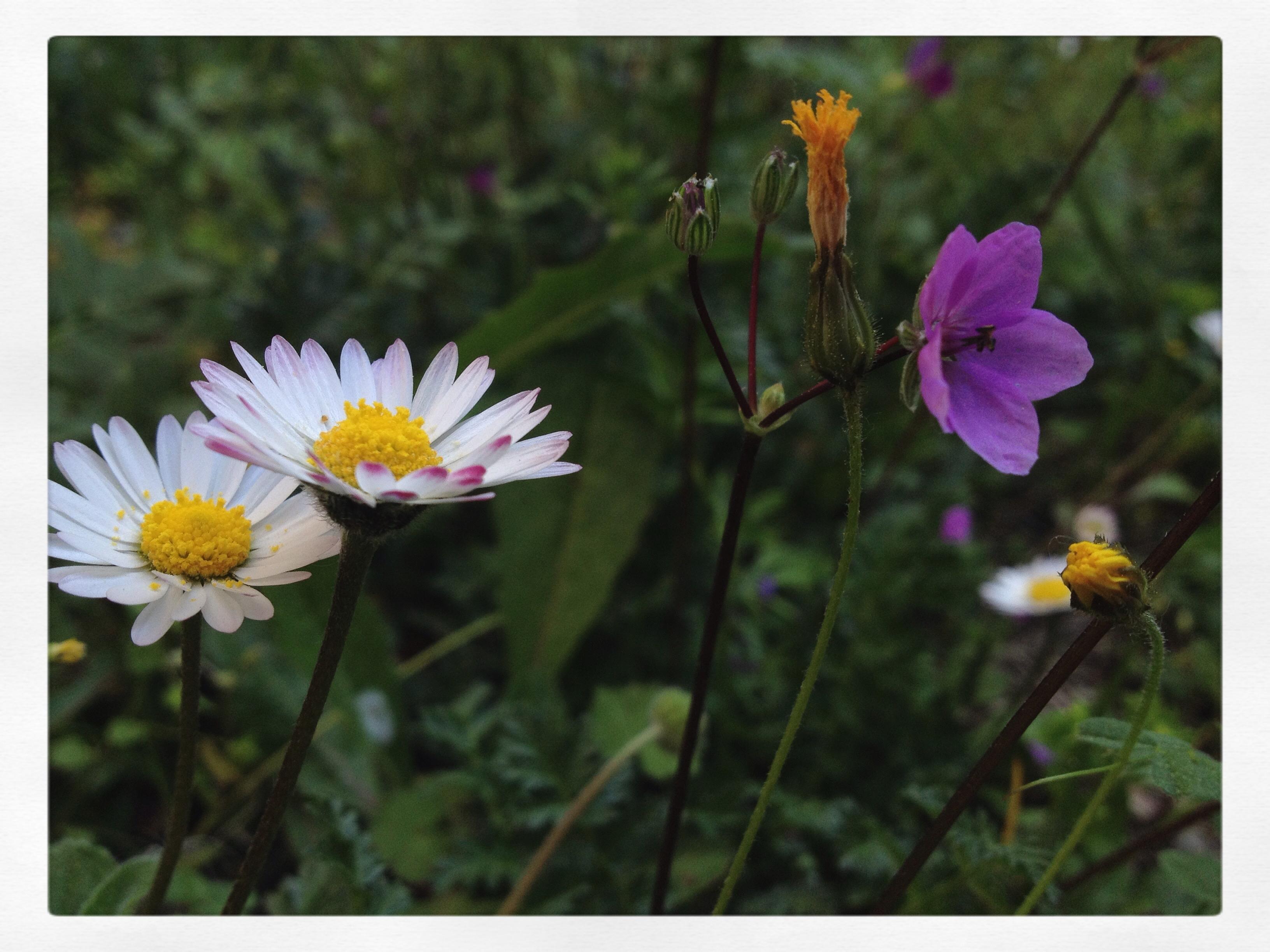 [Image du jour] et des fleurs
