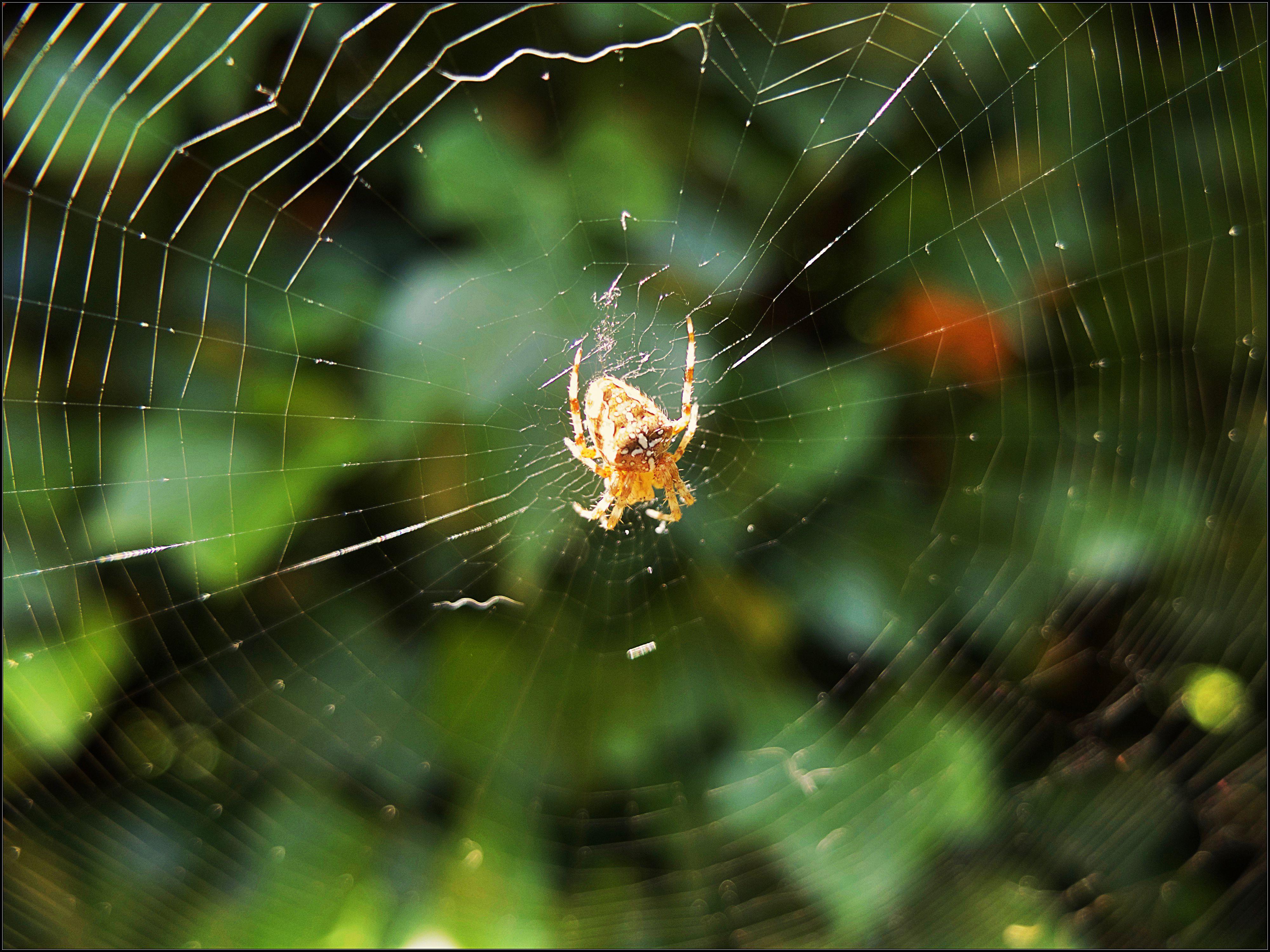 [Image du Jour] Arachne
