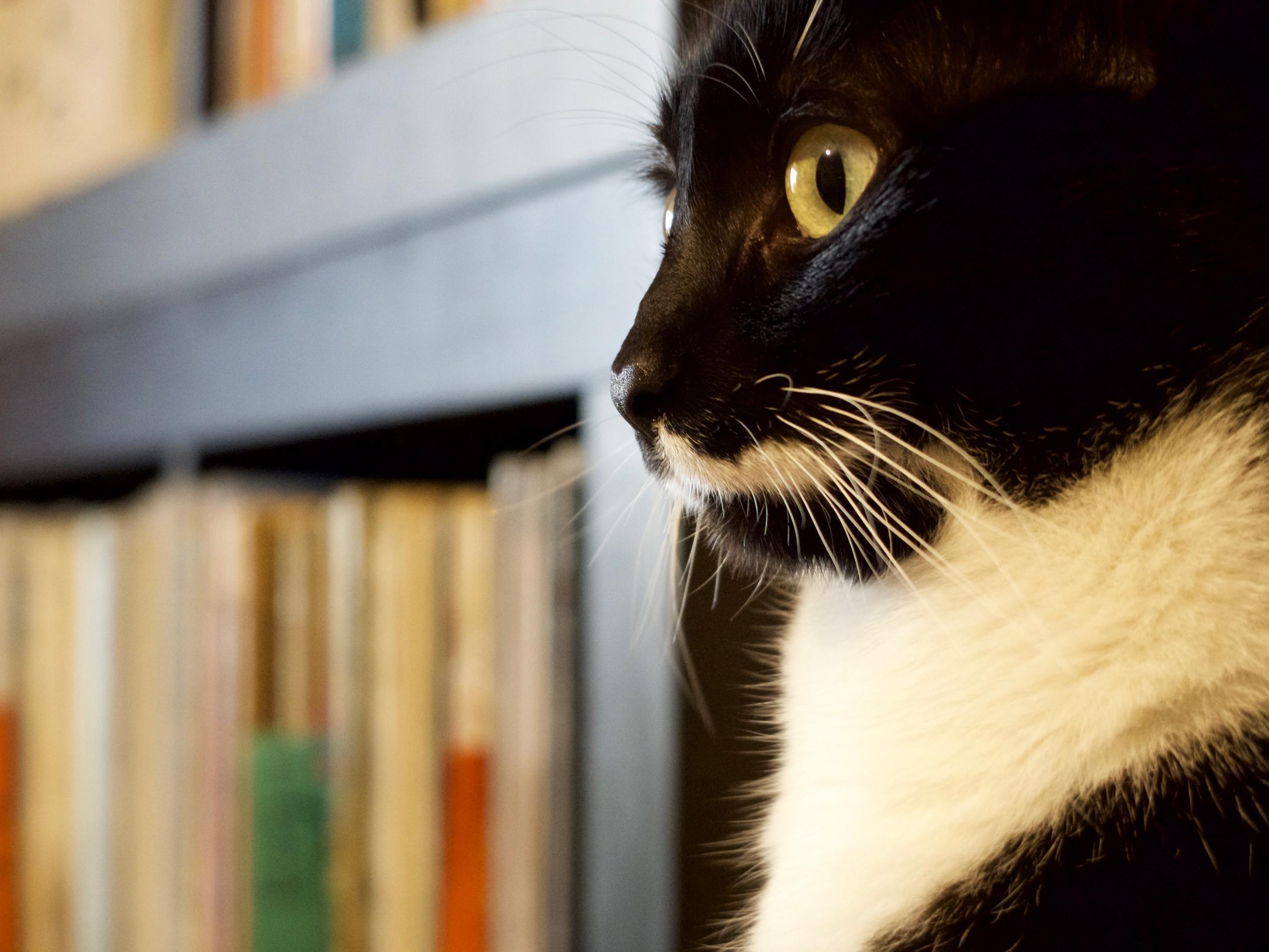 [Image du Jour] Omalée écoute Glenn Gould.