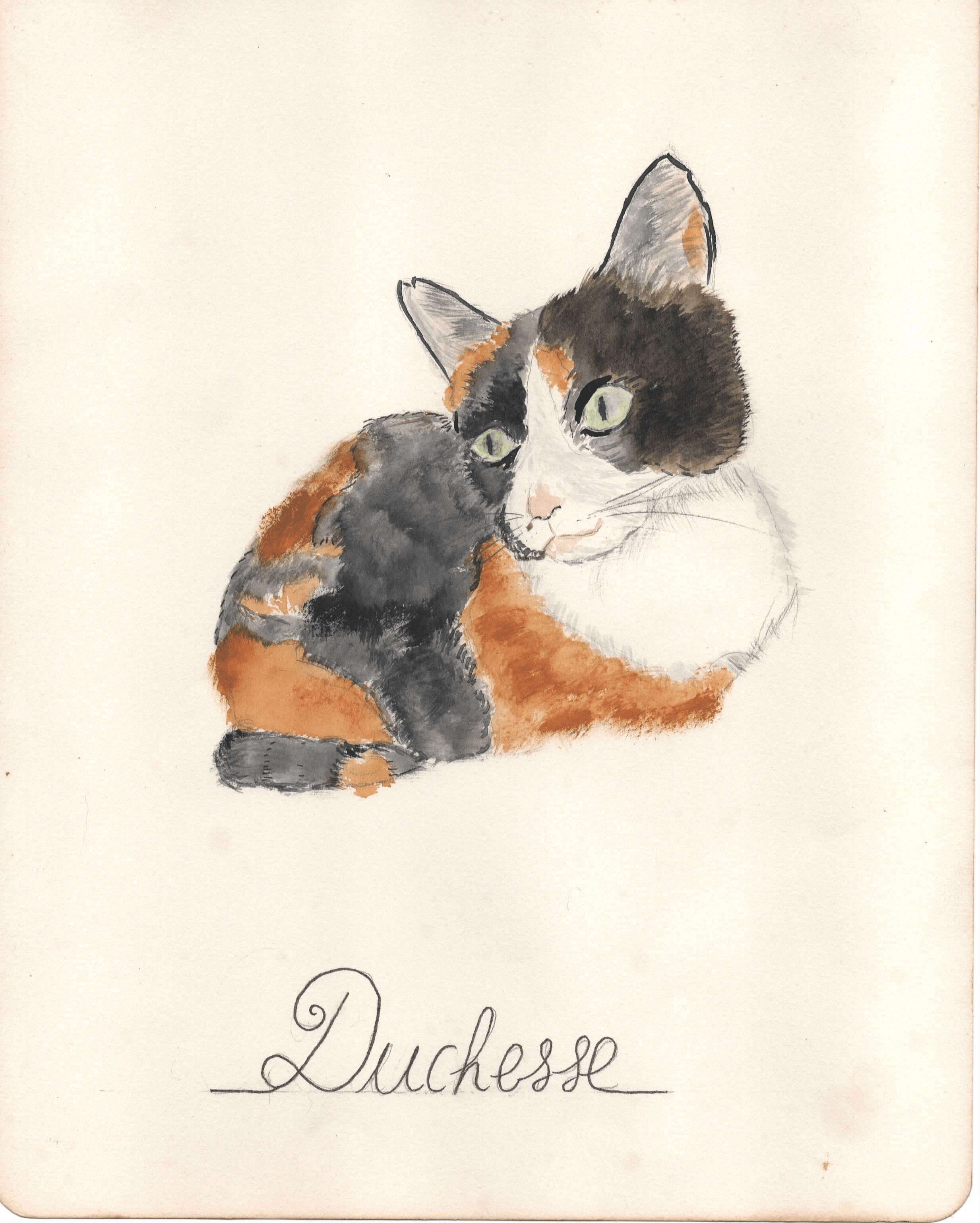 [Dessin du jour] Duchesse